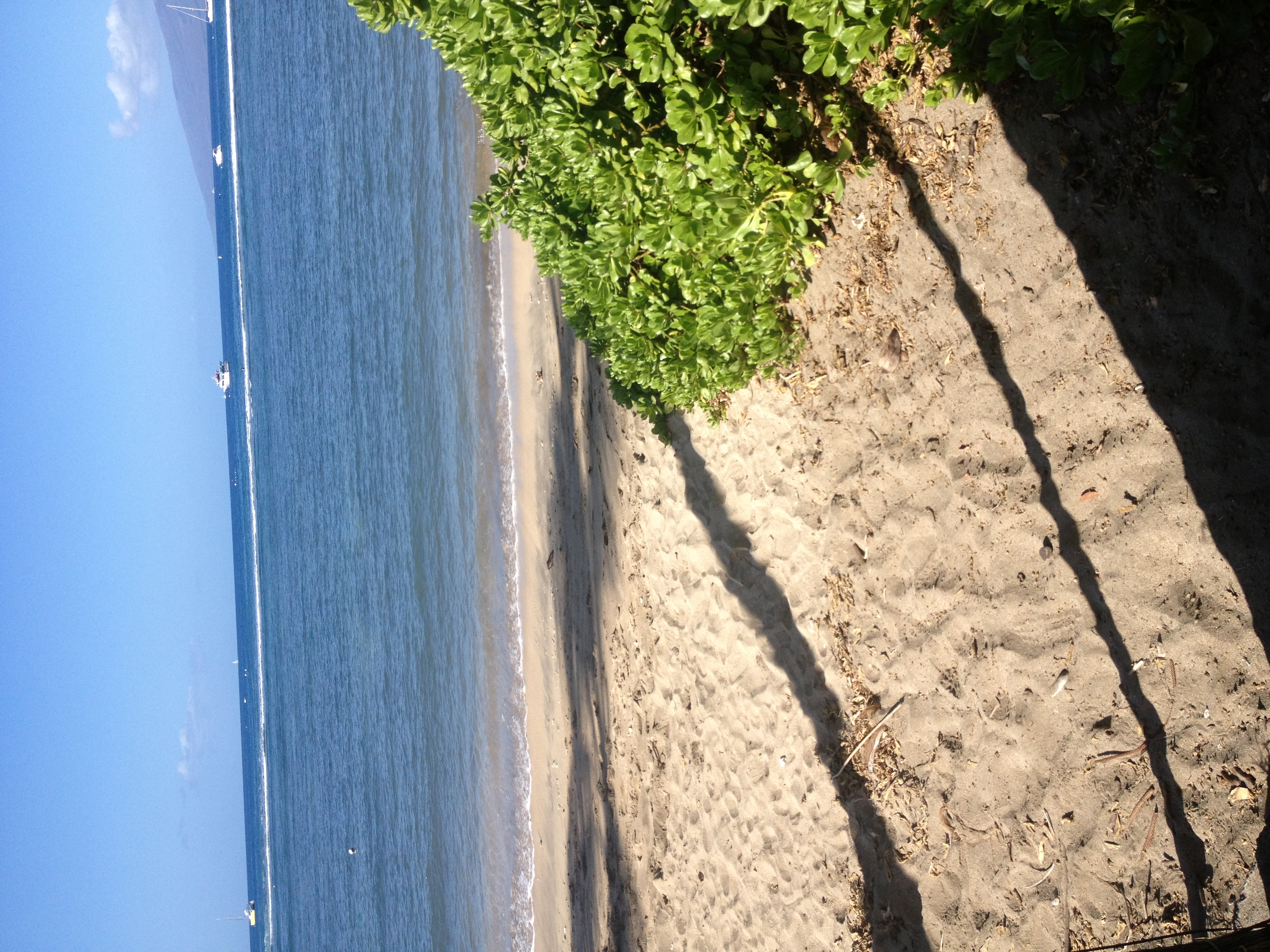 Lahaina Shores